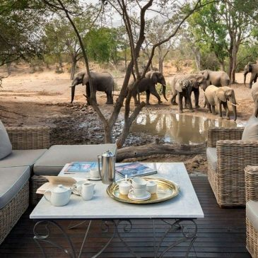 15 Melhores Lodges no Kruger Park | Safari e Alimentação Incluído