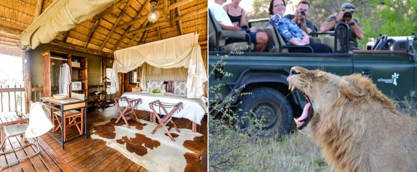 Lodge dentro do Kruger Park: nThambo Tree Camp